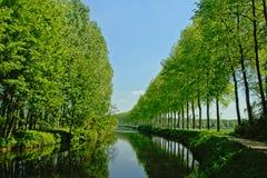 树车道沿运河` de Moer `的 免版税库存图片