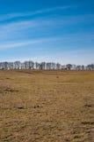 树连续在美丽的春天天空下 免版税库存图片
