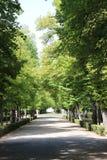 树透视在阿雷胡埃斯庭院里,西班牙 免版税库存照片