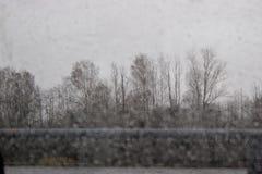树通过一个湿窗口在雨中 库存照片