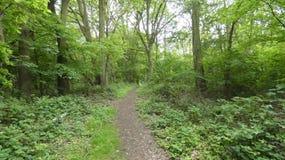 树通过森林排行了大道 免版税库存图片