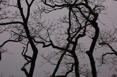 树通过雾 库存图片