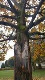 树遇见一道闪电 免版税图库摄影