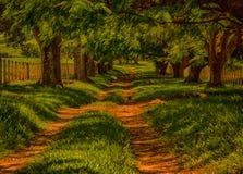 树道路在南美的 免版税库存照片