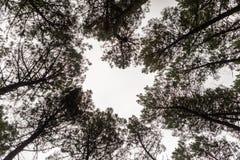 树金黄秋天的上面 库存照片