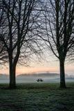 树长凳桌剪影黎明 库存图片