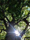 树阳光 库存照片