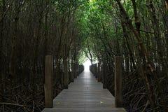 树隧道在美洲红树森林里 免版税库存照片