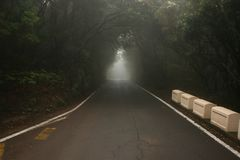 树隧道在黑暗的森林里 库存图片