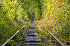 树隧道掩藏老铁路线 一个小组游人在距离走 免版税库存照片