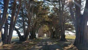 树隧道 免版税库存照片