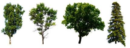 树集合 免版税图库摄影
