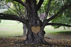 树雕刻 库存图片