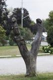 树雕刻 库存照片