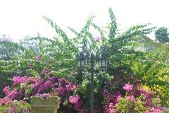 树零件背景015上面与桃红色花的 库存照片