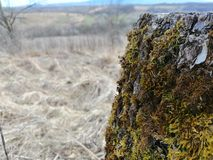树青苔在冬天 免版税库存照片