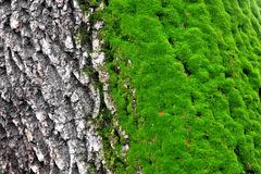 树青苔 免版税库存照片