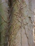树静脉细节  免版税库存图片