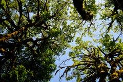 树顶上11 图库摄影