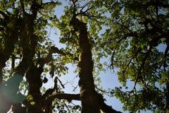 树顶上10 免版税库存照片