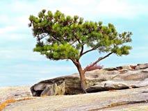 树顶面山 库存照片