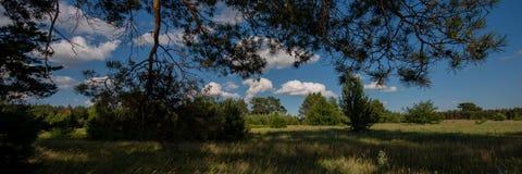 树领域和剪影在森林和天空里与云彩 万维网横幅 免版税库存照片