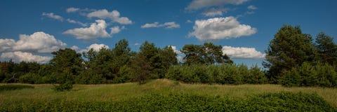 树领域和剪影在森林和天空里与云彩 万维网横幅 免版税库存图片