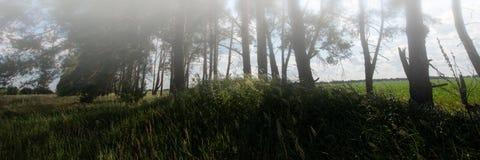 树领域和剪影在森林和天空里与云彩 万维网横幅 免版税图库摄影