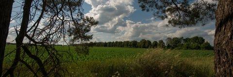 树领域和剪影在森林和天空里与云彩 万维网横幅 库存照片