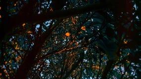 树颜色 库存图片