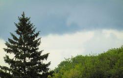 树风景摄影 免版税库存照片