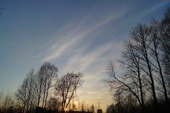 树风景晚上背景 库存图片