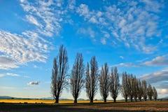树风景看法在郁金香领域的 库存图片