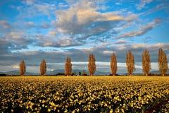 树风景看法在郁金香领域的 图库摄影