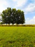 树风景视图摄影 免版税库存图片