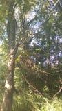 树,其中森林 免版税库存照片