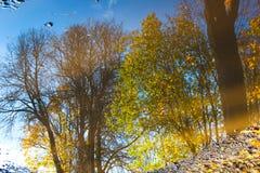 树,分支,在水坑把反射留在 抽象,艺术性的概念 库存图片