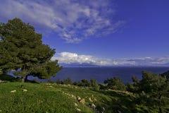 树,卡林诺斯岛希腊 图库摄影