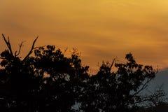 树,反对美丽的日落天空背景的草剪影  免版税库存照片