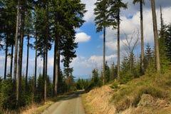 树,在Špičák附近的春天风景,滑雪胜地,漂泊森林(Šumava),捷克 图库摄影