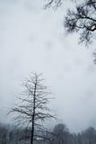 树,在雪风暴 Nj 库存图片