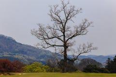 树,奈良在日本 库存照片