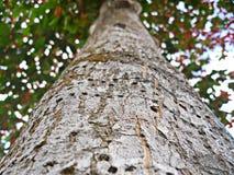 树,森林,自然,胸口,吠声,木头,绿色 库存照片