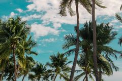 树,海,看法,大气 图库摄影