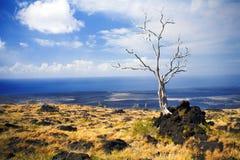 树,火山国家公园,大岛,夏威夷 图库摄影