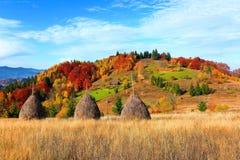 树,盖用黄色和猩红色叶子,落落日的温暖的光,高度在山 图库摄影