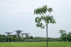 树,自然和人造 免版税图库摄影