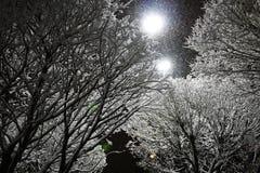 树,雪,冬天在荷兰 免版税库存照片