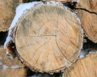 树击倒的树干  圆看了裁减 免版税库存照片