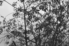 树 北京,中国黑白照片 免版税库存照片